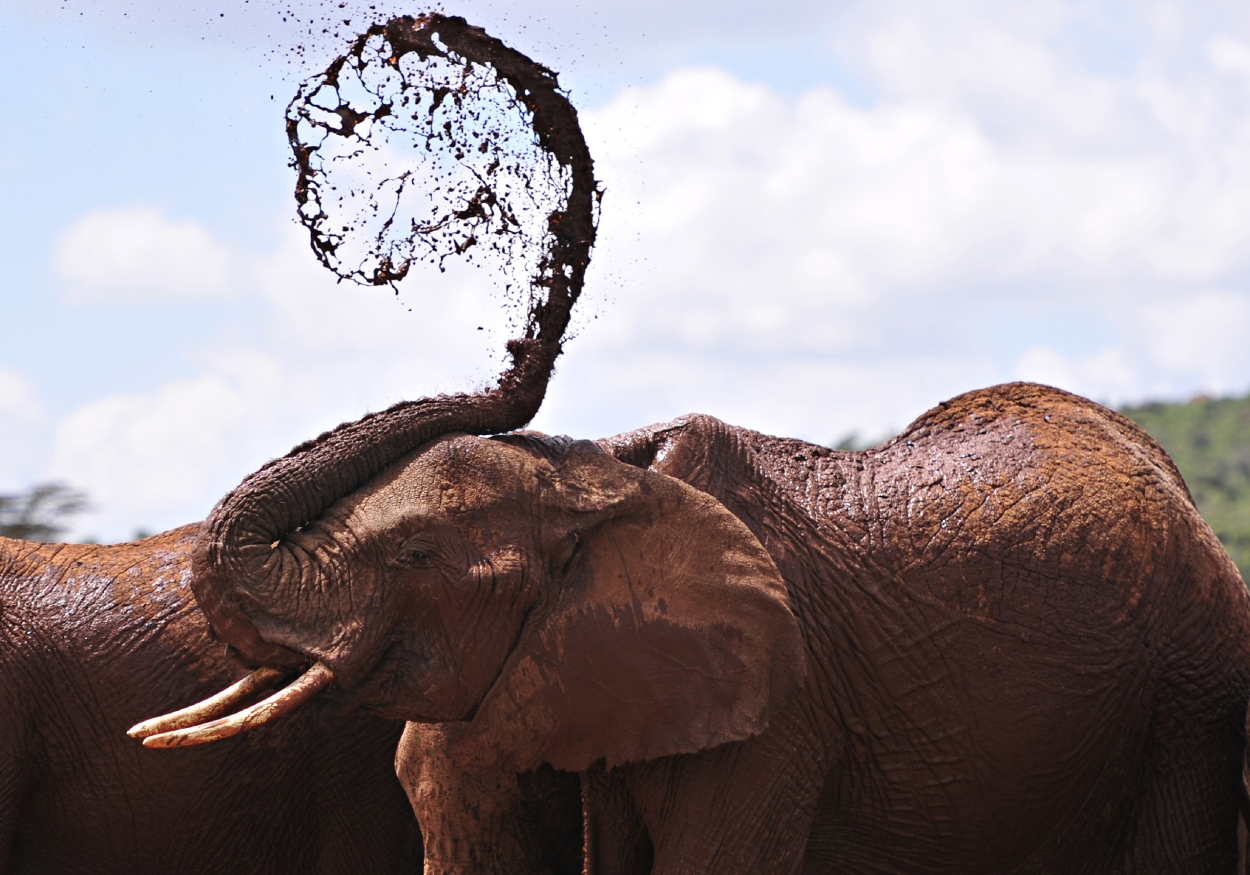 TOPSHOT-KENYA-WILDLIFE